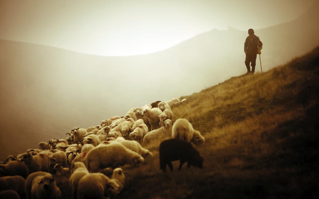 Un pastore